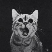 Аватарка пользователя котик